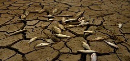 وضعیت محیط زیست ایران